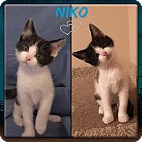 Adopt A Pet :: Niko - Jeffersonville, IN