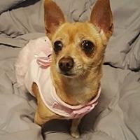 Adopt A Pet :: Camilla - Mesa, AZ