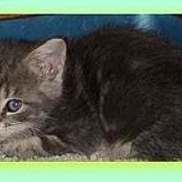 Adopt A Pet :: Charm - Herndon, VA