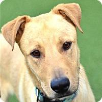 Adopt A Pet :: Jagger - San Francisco, CA