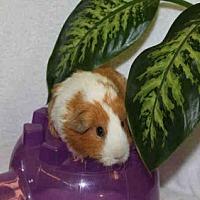 Adopt A Pet :: *Urgent* Dawn - Fullerton, CA