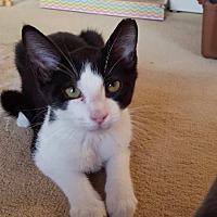 Adopt A Pet :: Donald - Colmar, PA