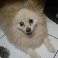 Adopt A Pet :: Misty - Fort Lauderdale, FL