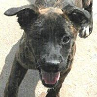 Adopt A Pet :: Baby Frolic - Oakley, CA