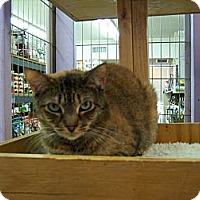 Adopt A Pet :: Cinnamon - Whittier, CA