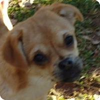 Adopt A Pet :: SADE - P, ME