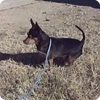 Adopt A Pet :: Apollo - Midland, TX