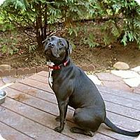 Adopt A Pet :: Darla - Chattanooga, TN