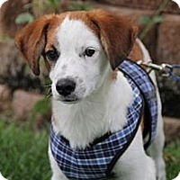 Adopt A Pet :: Hollywood - Broomfield, CO