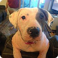 Adopt A Pet :: Pomaika'i - Honolulu, HI