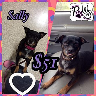 Chihuahua/Miniature Pinscher Mix Dog for adoption in Fowler, California - Sally