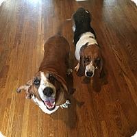 Adopt A Pet :: Clarabelle - Northport, AL