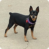 Adopt A Pet :: Brandi - Topeka, KS