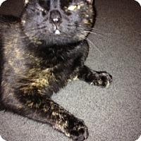 Adopt A Pet :: Luna_Courtesy Post - Columbia, MD