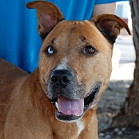 Adopt A Pet :: Briggs - Las Vegas, NV