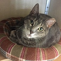Adopt A Pet :: Kit - Wilmington, DE