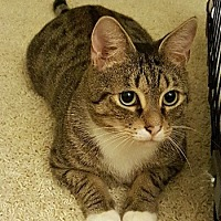 Adopt A Pet :: Robert Goulet - Lutherville, MD