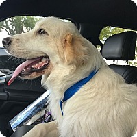 Adopt A Pet :: Ziggy - Kyle, TX