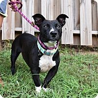 Adopt A Pet :: Champ - Alabaster, AL