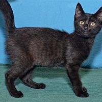 Adopt A Pet :: Winifred Sandpurrson - Lenexa, KS