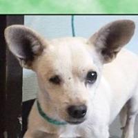 Adopt A Pet :: JACK - Red Bluff, CA