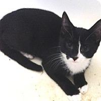 Adopt A Pet :: Paw Paw - Port Republic, MD