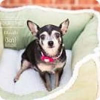 Adopt A Pet :: Christi - Shawnee Mission, KS