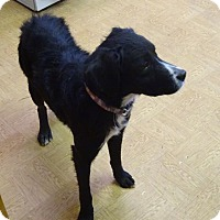 Adopt A Pet :: Bailey - Delaware, OH