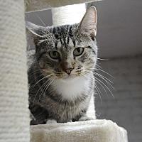 Adopt A Pet :: Starlet - Pine Bush, NY