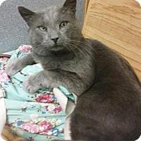Adopt A Pet :: Church - Putnam, CT