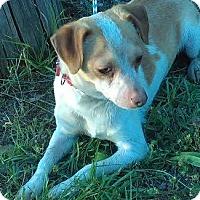 Adopt A Pet :: Chico - North Brunswick, NJ
