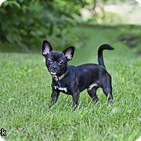 Adopt A Pet :: Clark - Shamokin, PA