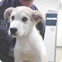 Adopt A Pet :: CEASER - Palmer, AK