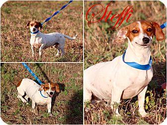 Dachshund Mix Dog for adoption in DeForest, Wisconsin - Steffi