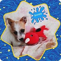 Adopt A Pet :: Snoopy - San Bernardino, CA