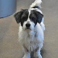 Adopt A Pet :: Sammy - Essington, PA