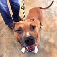 Adopt A Pet :: RIPLEY - Aiken, SC