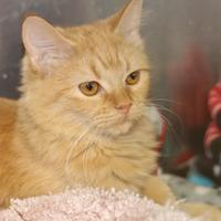 Adopt A Pet :: Rotini - Quincy, IL
