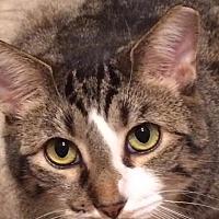 Adopt A Pet :: Harvey - Nashville, TN