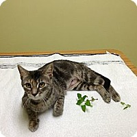 Adopt A Pet :: Sunflower - Warren, OH