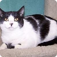 Adopt A Pet :: K-Eva3-Jackie - Colorado Springs, CO