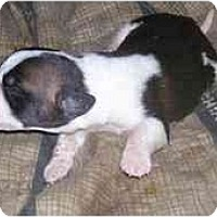 Adopt A Pet :: Saint pups - Evansville, IN