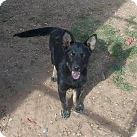 Adopt A Pet :: Zena - Post, TX