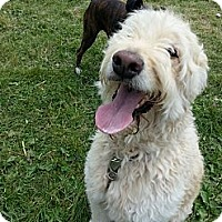 Adopt A Pet :: Toby - Northumberland, ON