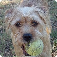 Adopt A Pet :: TRUDY - Mission Viejo, CA