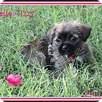 Adopt A Pet :: Sophia - Rockwall, TX