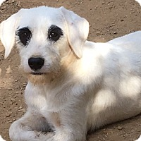 Adopt A Pet :: Hero - Staunton, VA