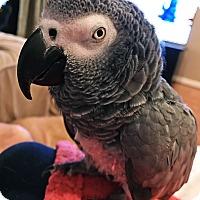 Adopt A Pet :: Indy - Tampa, FL