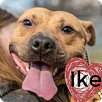 Adopt A Pet :: Ike-In Training! - Des Moines, IA