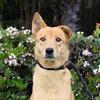 Adopt A Pet :: Scarlett - San Diego, CA
